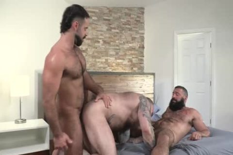 Three tasty Bears Teddy Torres, Alex Tikas, Alexander Kristov